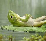 fullfrog